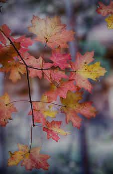 Saija  Lehtonen - Autumn Splendor