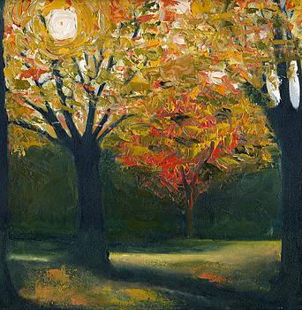 Backlit Trees by Katherine Miller