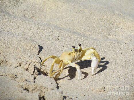 Beach stroller by Meagan  Visser