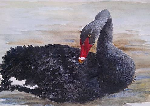 Beautiful Black Swan by Jan Lowe