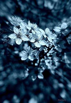Beauty by Marija Djedovic