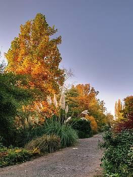 Bellevue Botanical Garden by Galina Kolpatcheva