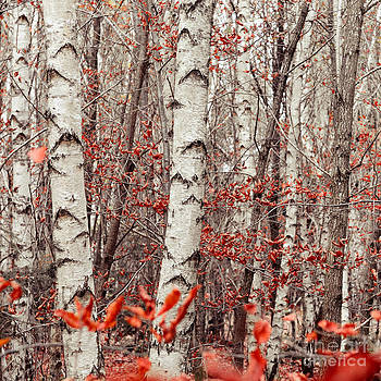 Hannes Cmarits - birches and beeches