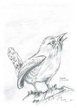 Bird by Foqia Zafar