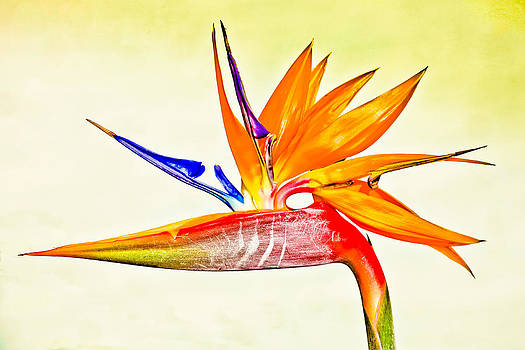 Bird Of Paradise by Jim Nelson