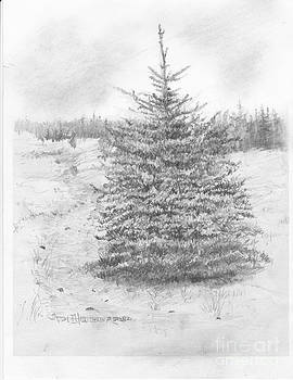 Jim Hubbard - Black Hills Spruce