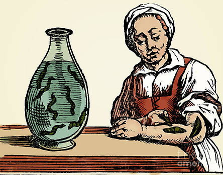 Science Source - Bloodletting Leech Method