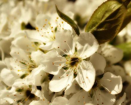 Blossom by Christine Carter