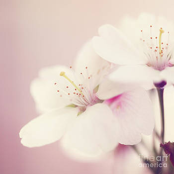 LHJB Photography - Blossom