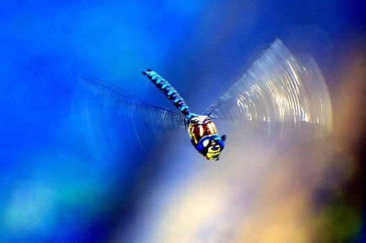 Blue Dragon by Don Mann