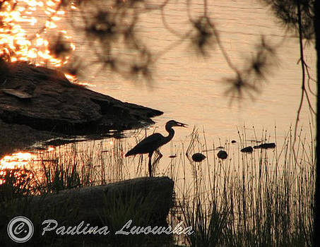Blue Heron 2009 by Paulina Lwowska