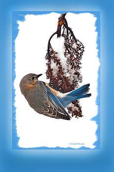 Randall Branham - Blue Must be the Color Angels choose