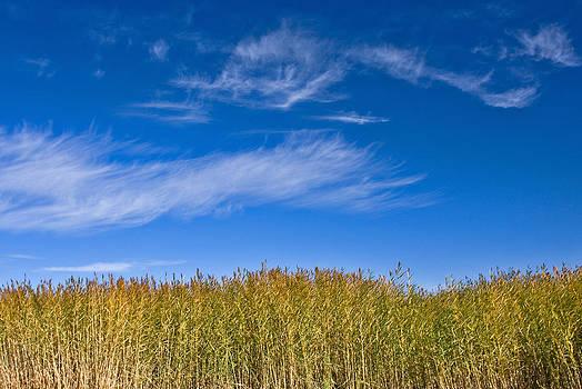 Blue Sky by Jason KS Leung