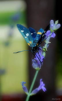 Blue summer by Marija Djedovic