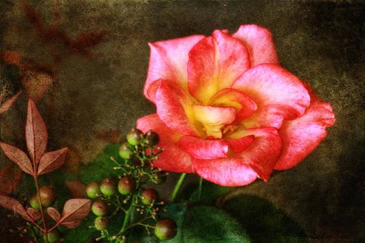 Blushing by Joan Bertucci