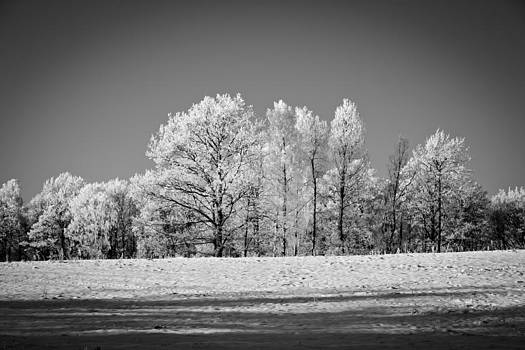 BnW Winter by Robert Hellstrom