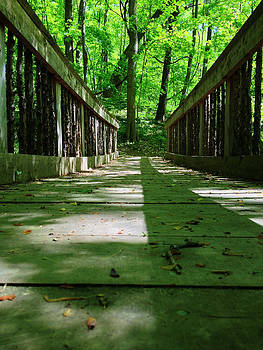 Bridge in the woods by Andrew Martin