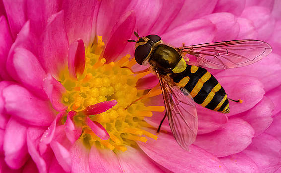 Busy Bee by Robert Mitchell