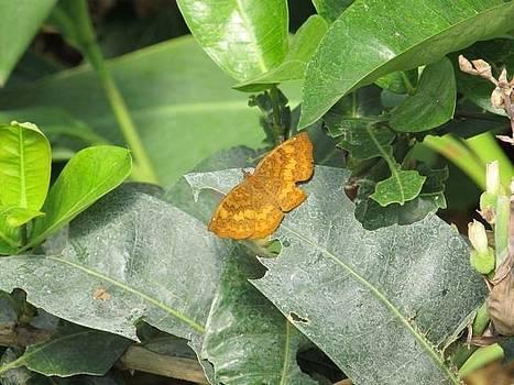 Butterfly by Adil