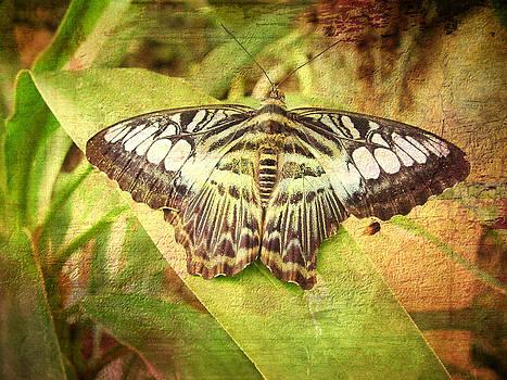Butterfly by Ken Reardon