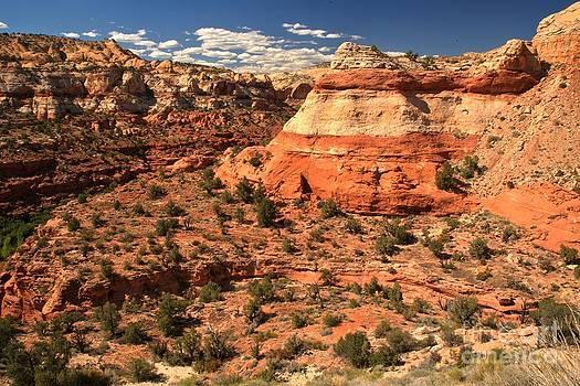 Adam Jewell - Calf Creek Canyon Red Rocks