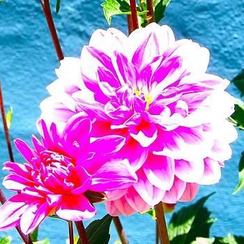California Chrysanthemum by Lisa Merman Bender