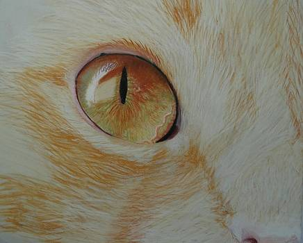 Cat Eye by Laurie Cartwright