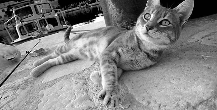 Cat by Nina Peterka