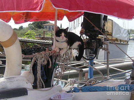 Cat on board by Rogerio Mariani