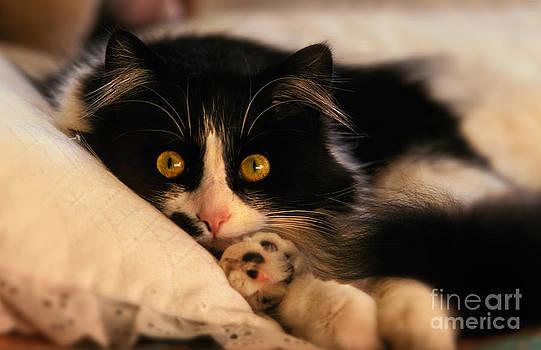 Ron Sanford - Cat
