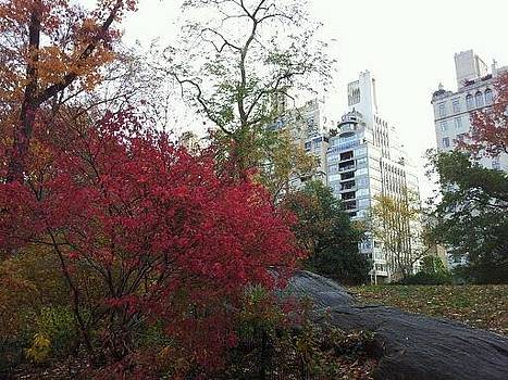 Central Park N.Y Fall 2013 by Theresa Crawford
