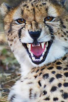 Stanza Widen - Cheetah With Attitude