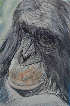 Chimpanzee by Betty Mulligan