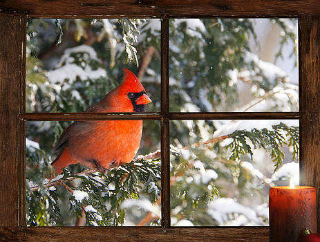 Christmas Cardinal. by Kelly Nelson