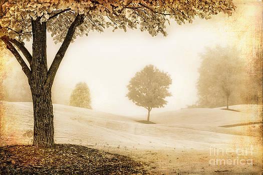 Dan Carmichael - Cloaked in Fog