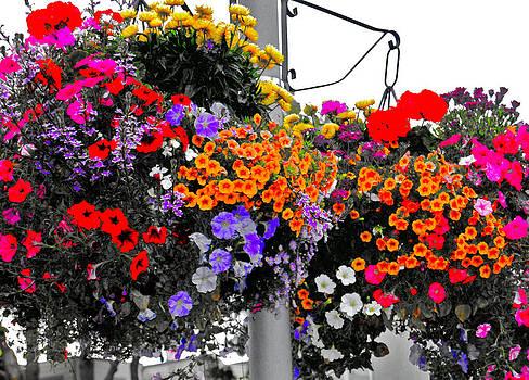 Color Pop by Lisa Merman Bender
