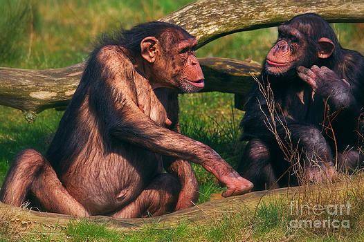 Nick  Biemans - Conversation between two chimpanzees