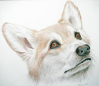 Corgi by Mary Mayes