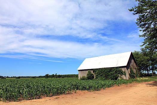 Corn Rows by Sheryl Burns