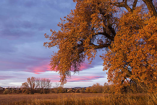 Tim Grams - Cottonwoods at Sunrise