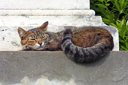 Cute cat by Borislav Marinic