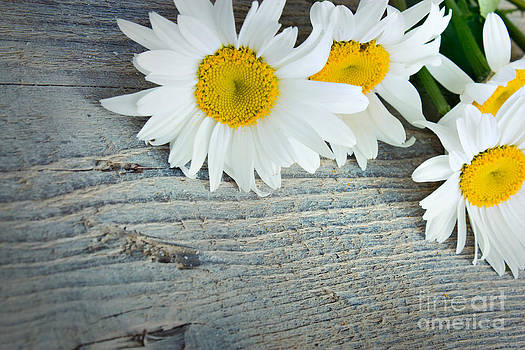 Mythja  Photography - Daisies