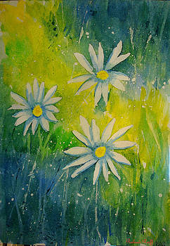Daisies by Roland Reiff