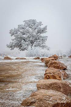 Dead Of Winter by Zach Connor
