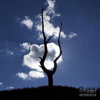 BERNARD JAUBERT - Dead tree in backlighting