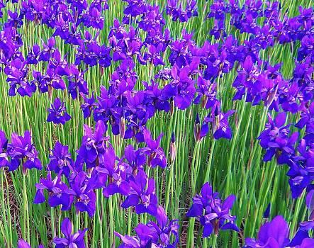 Deep Purple by Jeff Moose