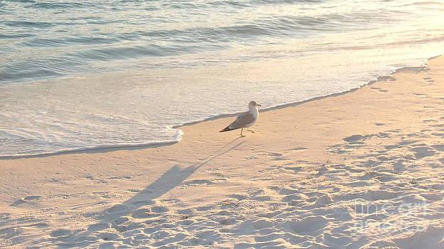 Destin Fla Seagull by Craig Calabrese