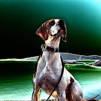 Dog Posing In Moonlight by Kent Andersen