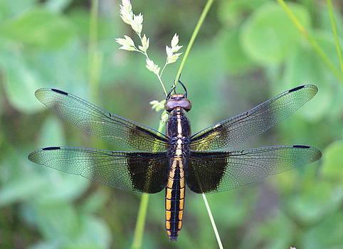 Rosanne Jordan - Dragonfly Pose