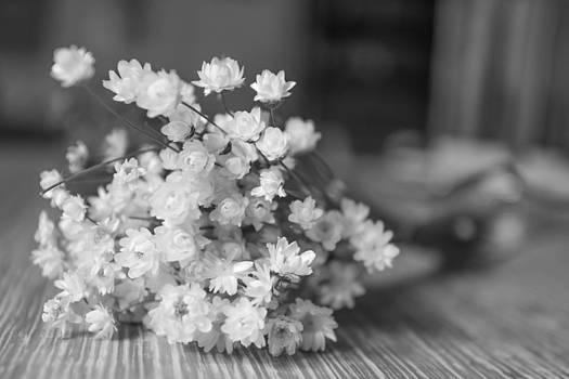 Dry flowers by Nina Peterka